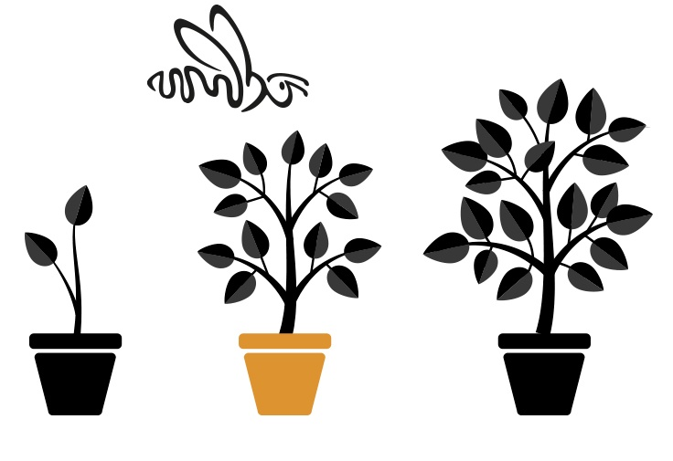 Plantas con Abeja MarketiNet